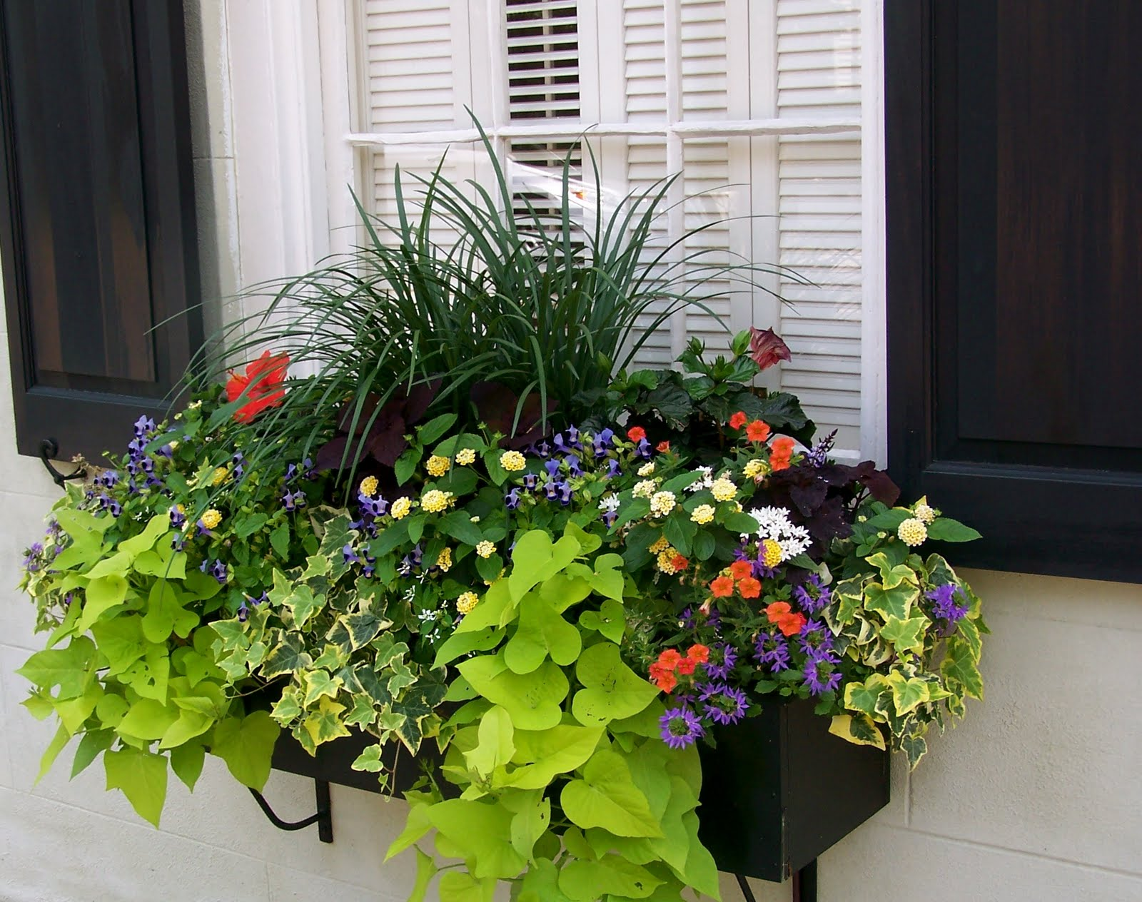 the impatient gardener how to plant a rockin 39 window box garden and outdoors pinterest. Black Bedroom Furniture Sets. Home Design Ideas
