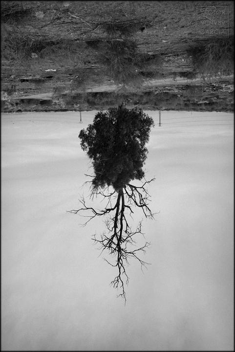 fotografia,limites,naturaleza,raices,patas_arriba,eucalipto,murcia,arte