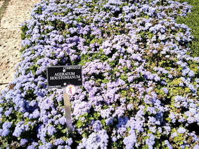 Полотно из цветов в Болгарии