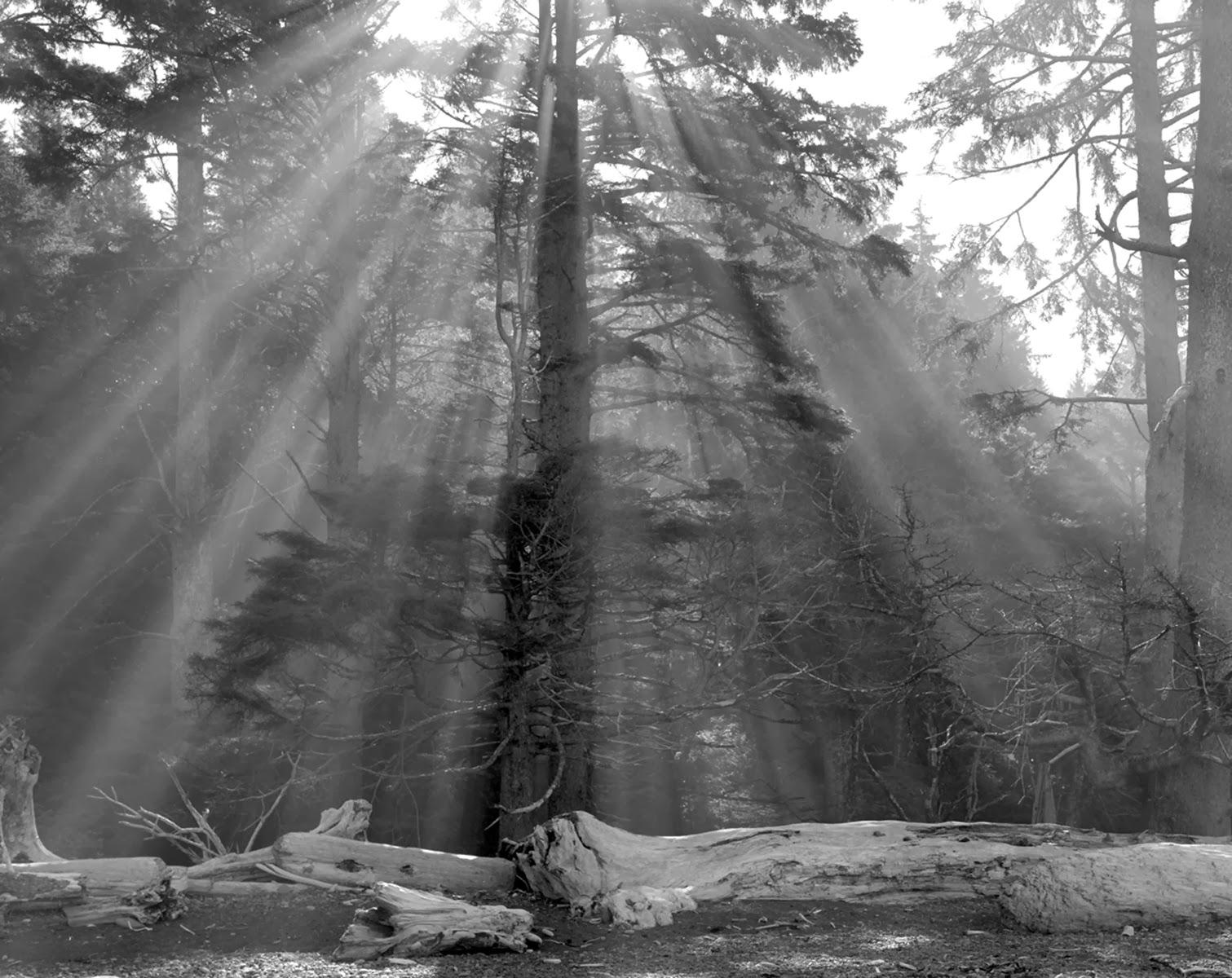 William Lemke, Suns Rays Rialto