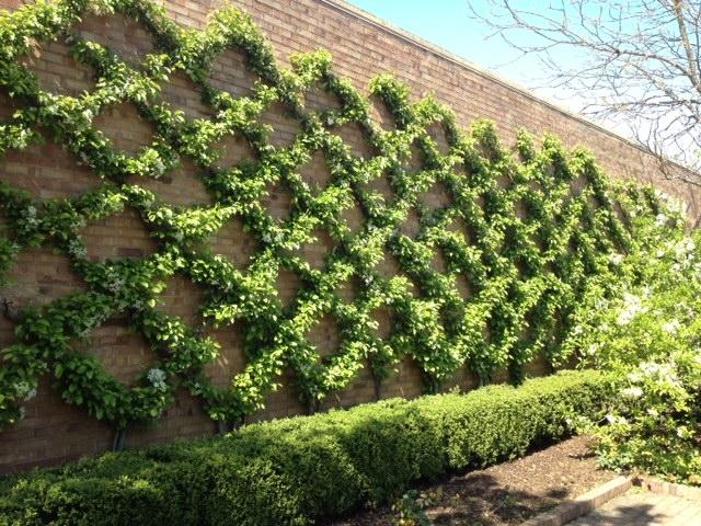 Garden Variety Inspiration