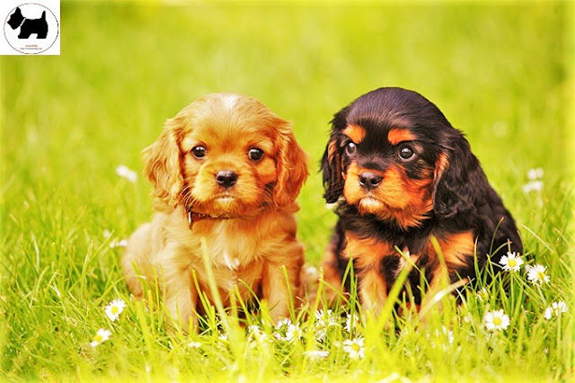 Cutest Dog Breeds, Best Dog, Dog