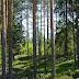 SLL: Virheelliset luvut metsien hiilinielusta on korjattava viipymättä