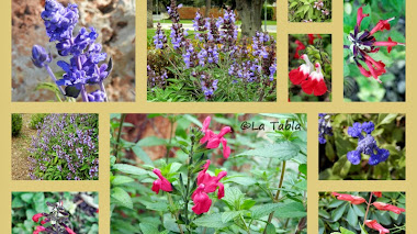 Para amantes de las salvias: The Plant Lover's Guide to Salvias