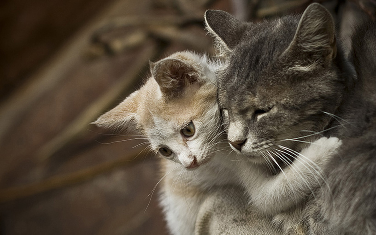 Cute Animals Showing Some Love [45 Pix]