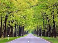 Menebang Pohon di Pinggir Jalan