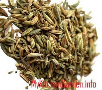 Picture of Fennel Seeds For Acid Reflux