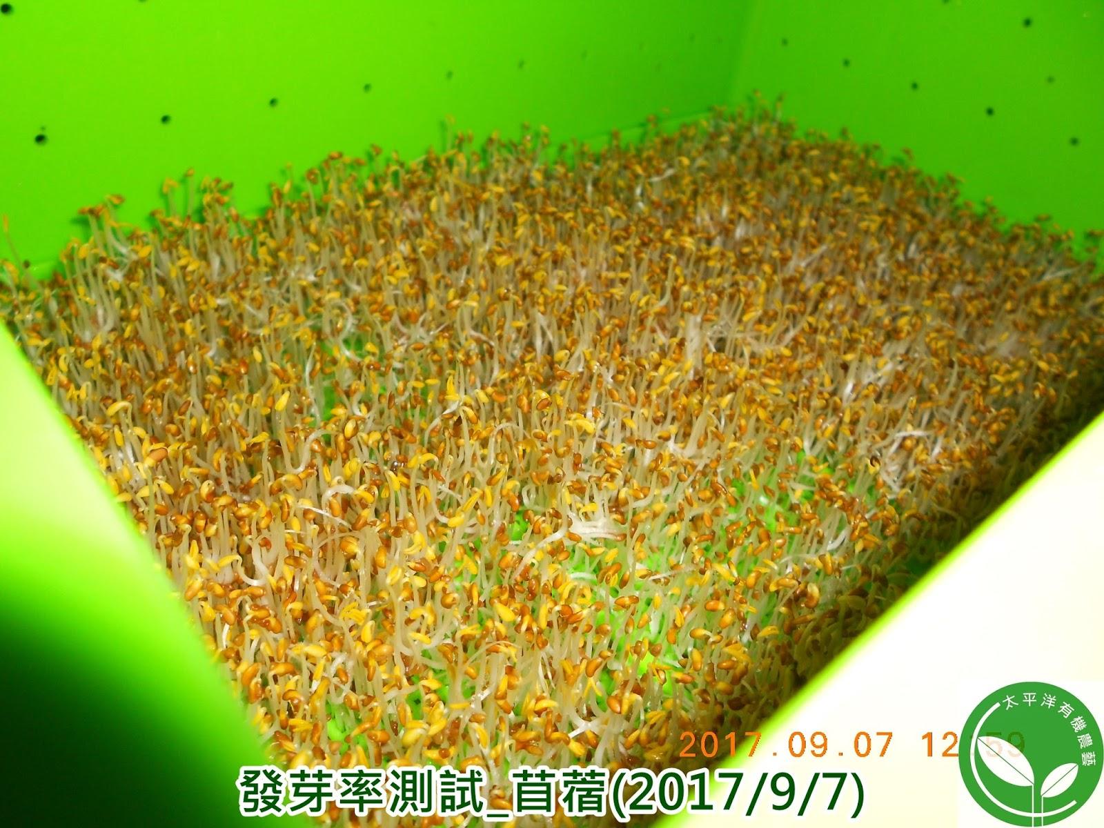 苜蓿草栽種法