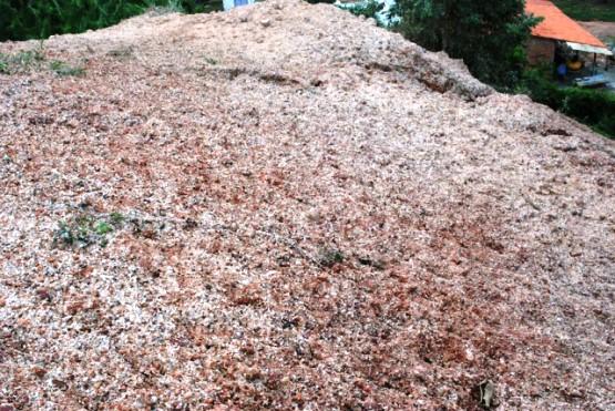 Montanha de dinheiro triturado é encontrado em Poço de Eike Batista em Esperantinópolis