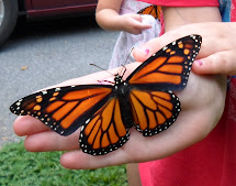 Small custom monarch gardens, certified monarch waystations and education programs.