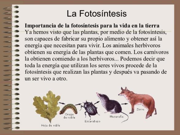 Importancia de la Fotosíntesis