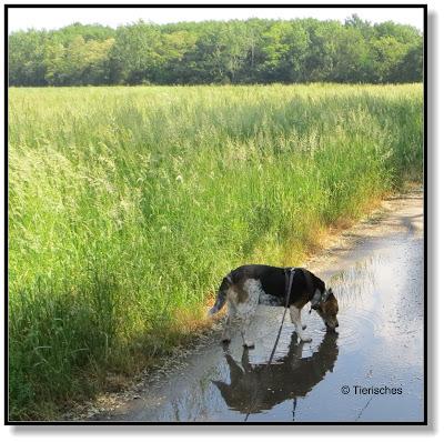 """Emma vom Blog """"Tierisches"""". Ein Hundeblog"""