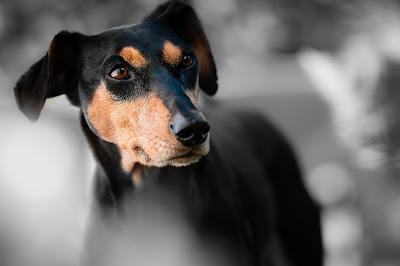 Hundblick - Rörelse för djurrätt