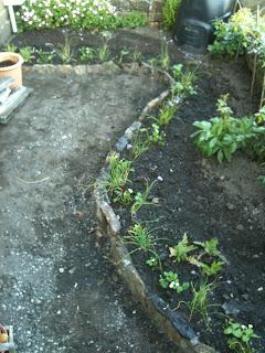gardening, easy gardening, life on pig row