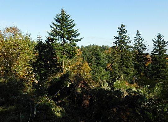Las na Trzebuńskiej Górze.