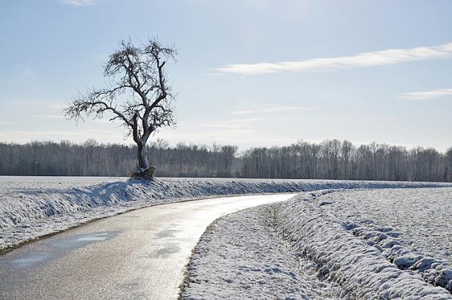 Campagne sous la neige