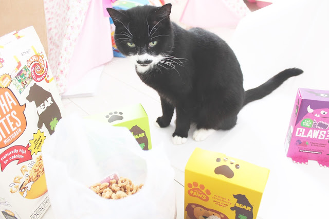 black and white cat with moustache eating children's alphabites breakfast cereal