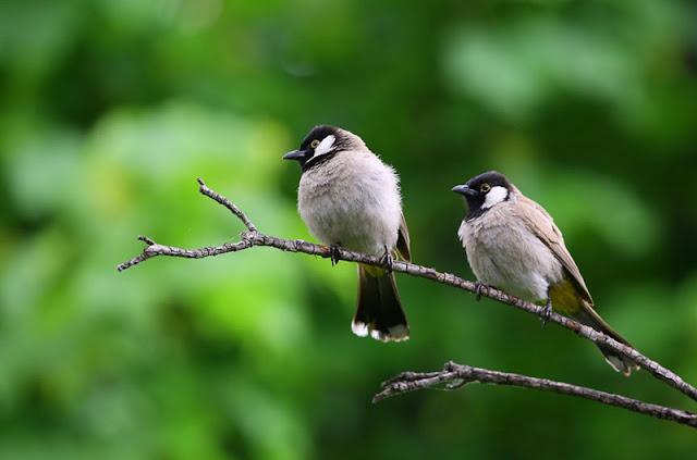 Comptage des oiseaux des jardins 2018 avec la LPO