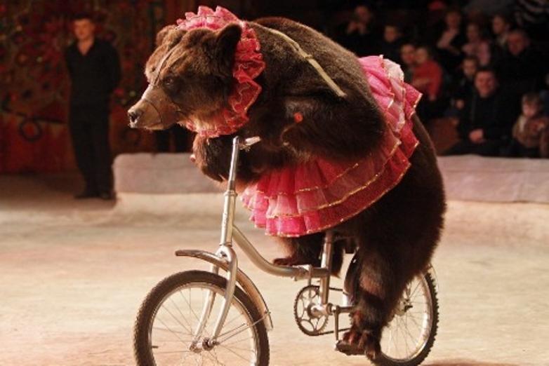 Urso a andar de bicicleta num circo