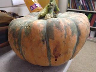large orange pumpkin with flattened top and green vertical markings sitting on a table