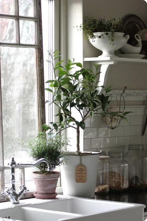 Beautiful farm sink in #FrenchFarmhouse kitchen with glazed subway tile, plants, and open shelf