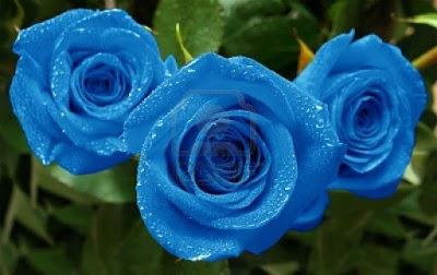 Flores hermosas, Rosas lindas