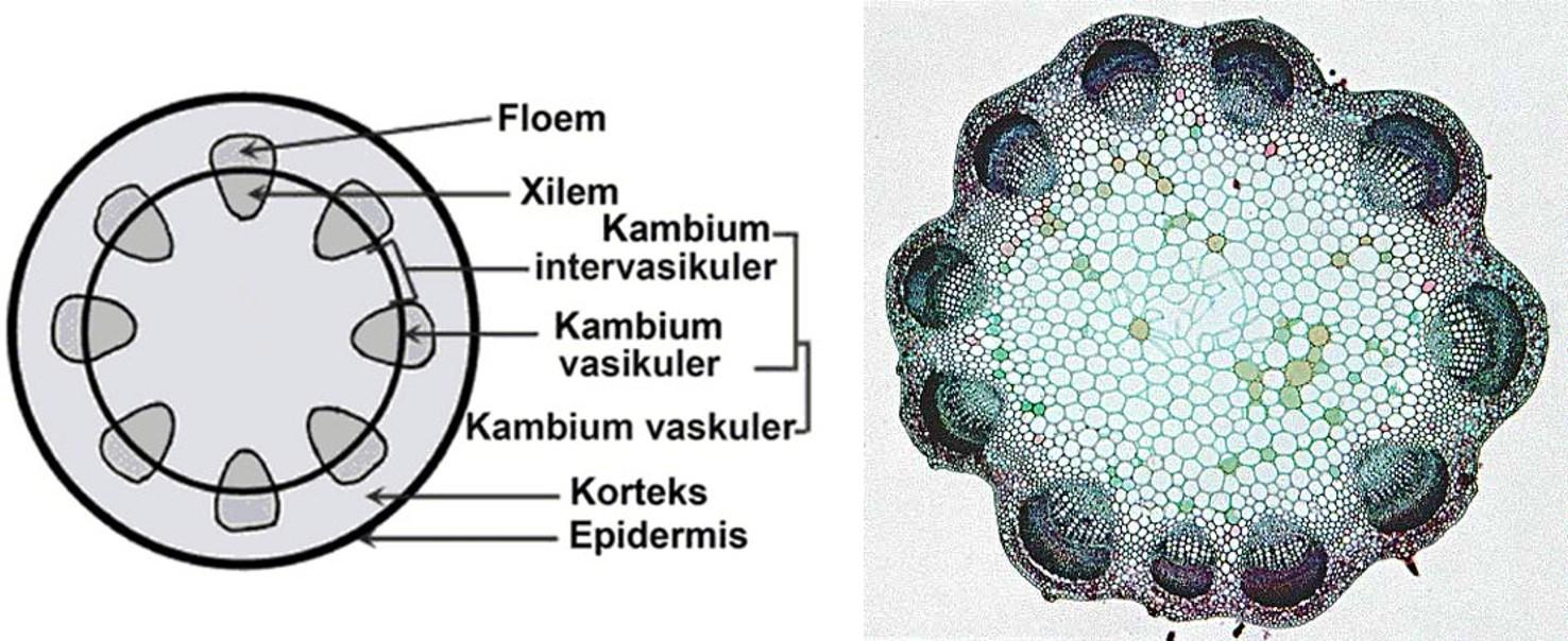 Kunci Jawaban Jaringan tumbuhan yang memiliki fungsi ...