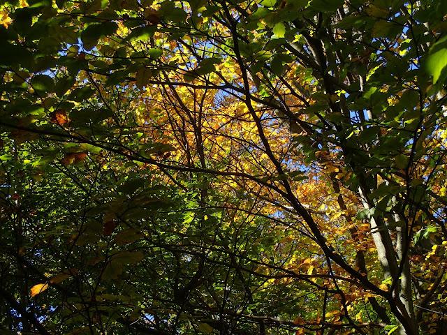 Jesienne kolory na początku października