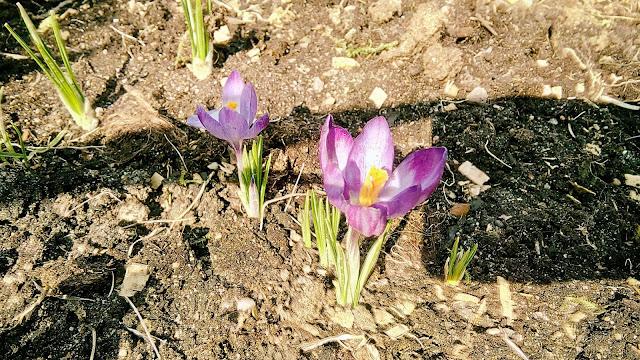 Wiosna: nowa perspektywa budzącej się do życia przyrody