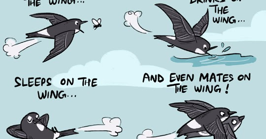 Green Humour The Swift