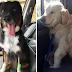 Animais de estimação que acabaram de voltar do veterinário e suas expressões dizem tudo