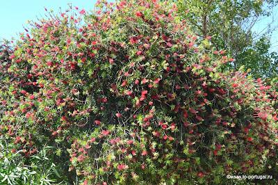 наш сад в Португалии