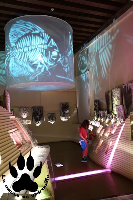 salle-paleontologie-musee-histoire-naturelle-venise