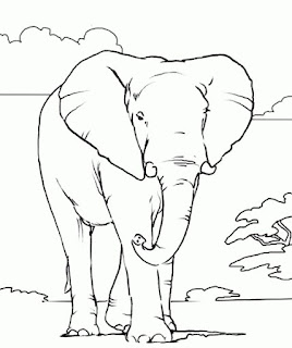 Most Popular African Elephant Coloring Pages Animals