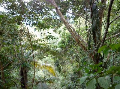 Komponen Ekosistem : Biotik, Abiotik, Produsen, Konsumen dan Pengurai lengkap dengan Contohnya