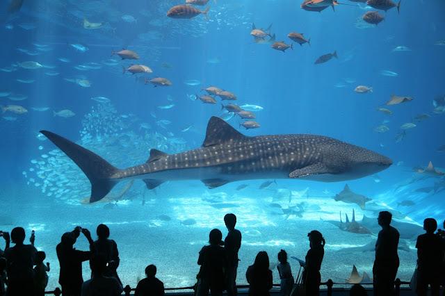 Best Aquariums in the USA: Florida Aquariums