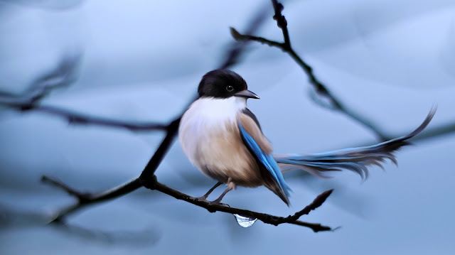 Blue and White Sparrow HD Wallpaper