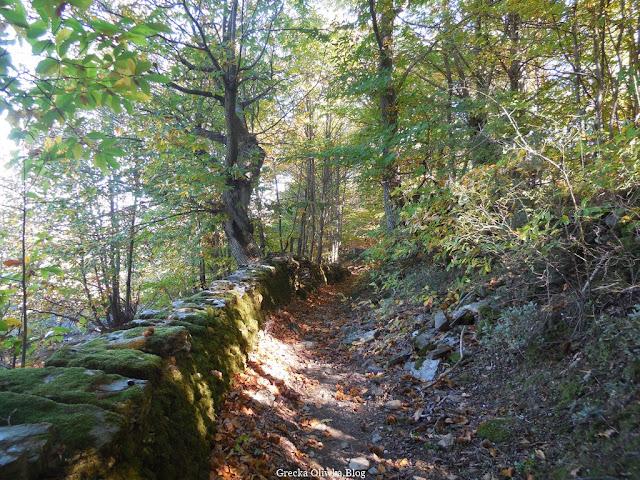 ścieżka leśna pokryta jesiennymi liśćmi kasztanowców, kasztanowy las Agiasos Grecja