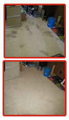 old pet stain in carpet