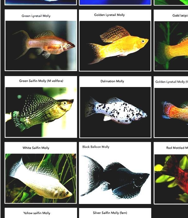 List Of Freshwater Aquarium Fish Species Fish For Fish Tanks Aquariums