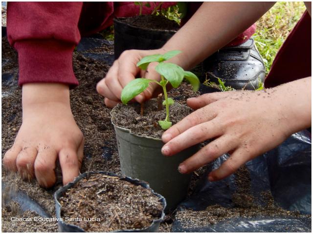 Sembrar, trasplantar, cosechar - Chacra Educativa Santa Lucía