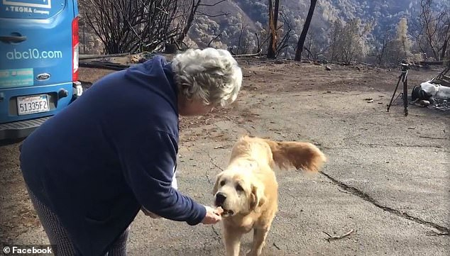 #TopStory :   #California dog survives wildfire, waits for family at burned down house.