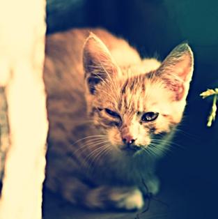 Ampuh Cara Mengobati Kucing Mencret Atau Diare