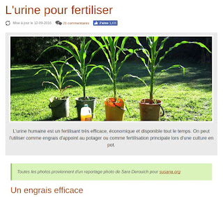l'urine pour fertiliser !