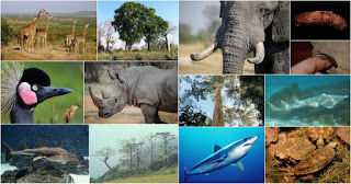 India proposed Changes in Species List in CITES