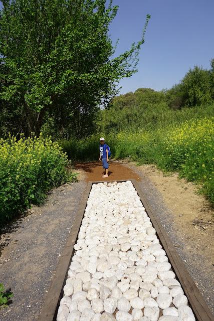 מסלול הליכה אבנים