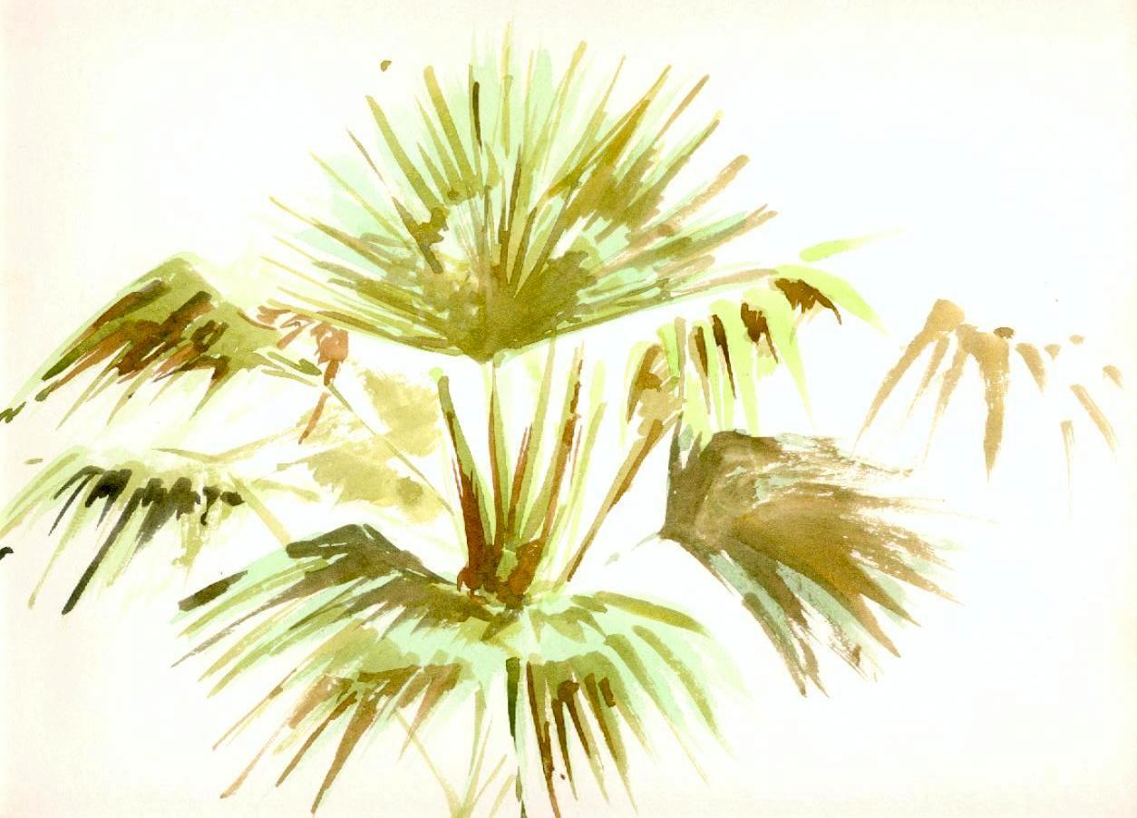Dibujos Palmeras Hawaianas Hojas De Palmera 1990 Acuarela