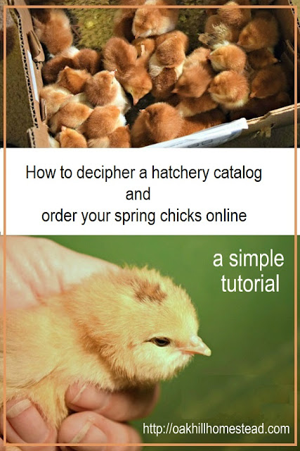 How to order chicks from an online hatchery.