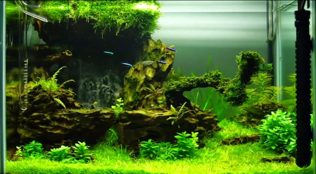 vinhaqua.com - Hồ thủy sinh trọn bộ - Suối thác 10