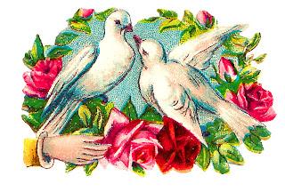 dove birds romantic vintage rose flowers art digital download image